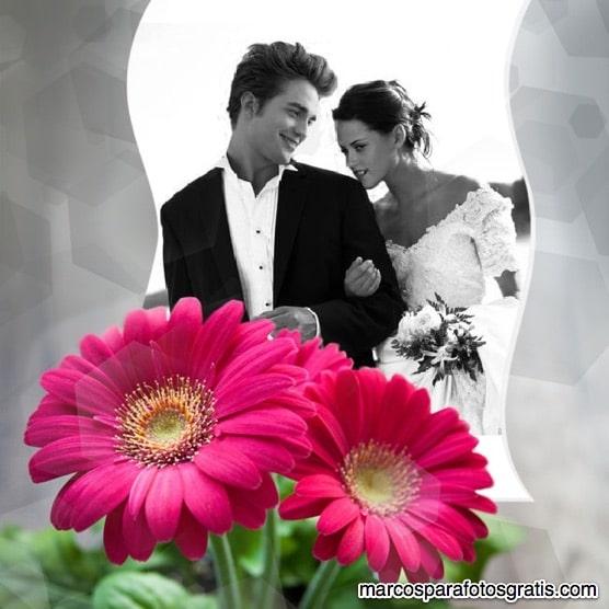 Marcos con flores de margarita
