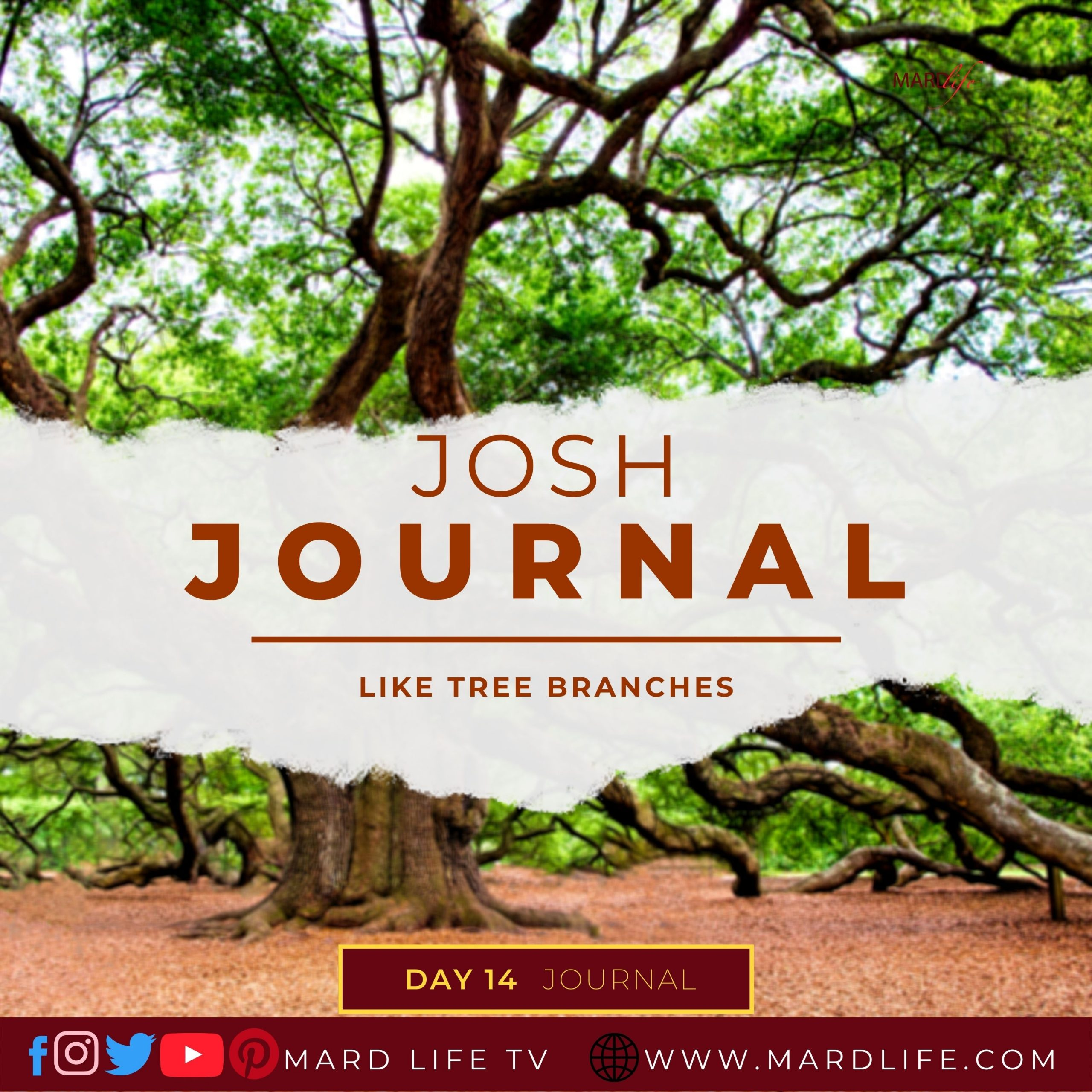 Nature, Branches, Tree Branches, Value, Time, Waste, Valuable, Precious, Decision,