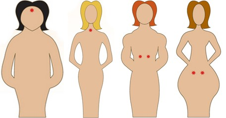 Profils des 4 types glandulaires