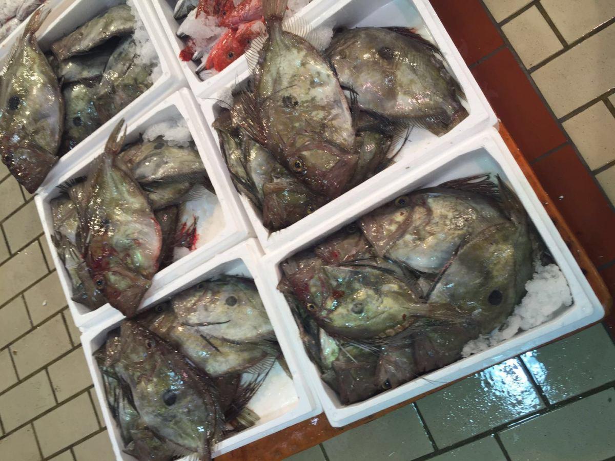 Fornitura ittica