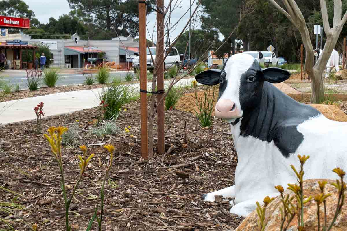Cow in Cowaramup. 5 northern towns in the Margaret River Region