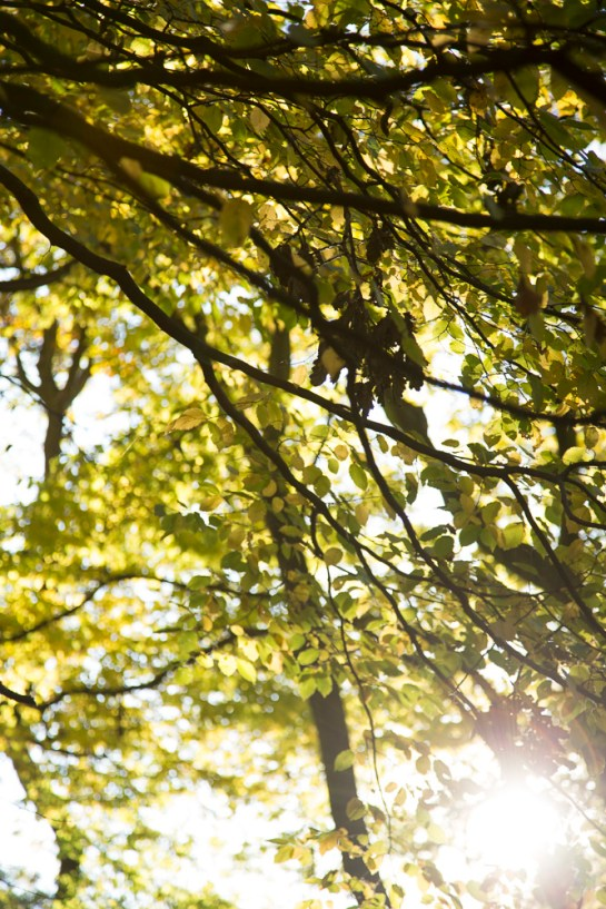 Photo: sunlight shining through colourful autumn leaves in woodland in north London, by British Photographer Margaret Yescombe -FO6A0597
