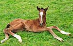 foal-newborn-10068021