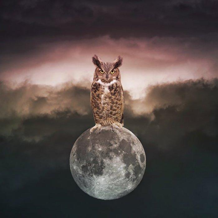 luna llena buho - margit glassel