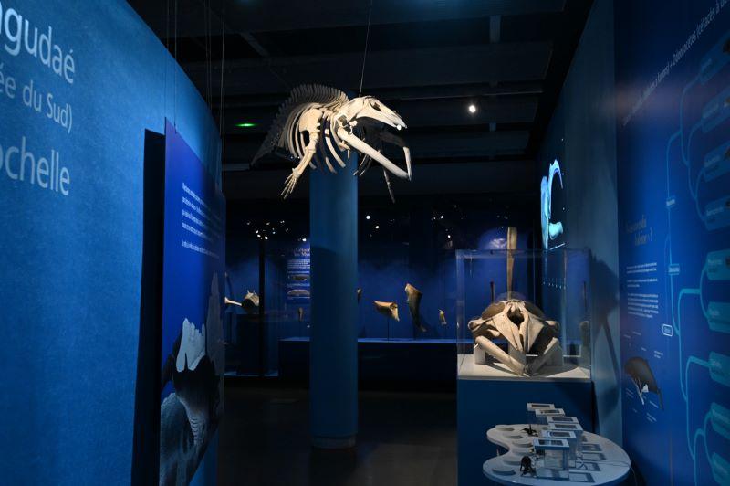 Expo Baleines- Julien Chauvet Ville La Rochelle
