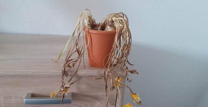 Mein Blumentopf