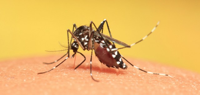 10 Symptoms of Dengue