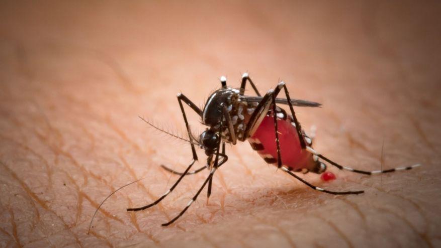 Chikungunya in pakistan
