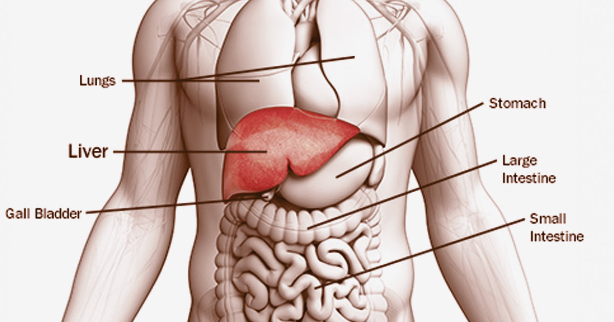 Causes and Effects of Liver Problem in Pregnancy