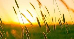cancer and vit D