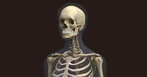 strong skeleton