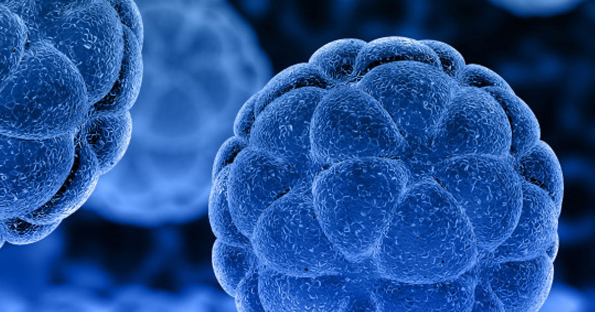 how mechanism of autophagy sustains life?