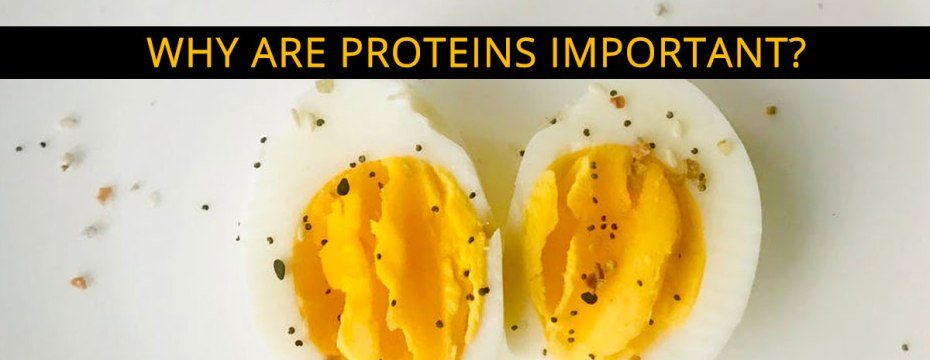 How much Protein do you Need