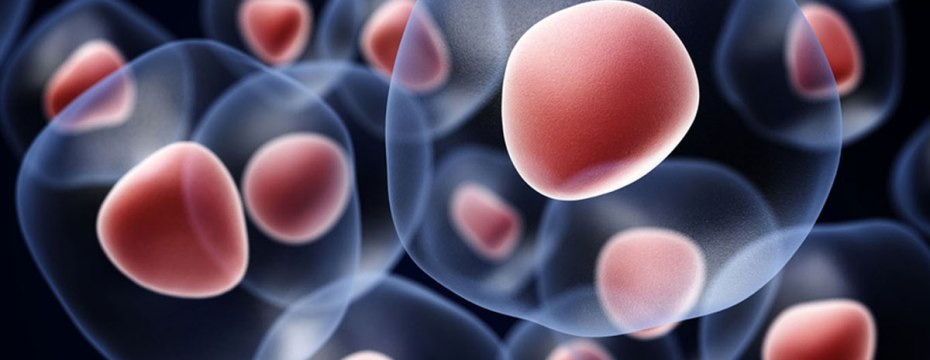 Amazing Benefits of Stem Cells