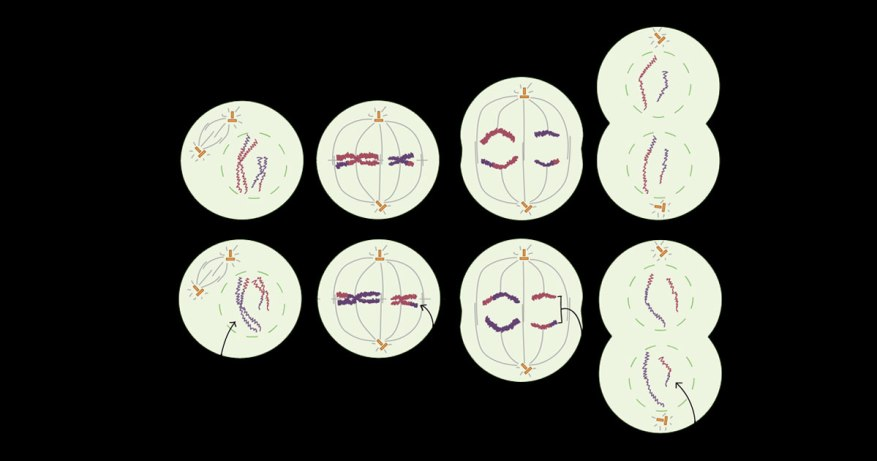 symptoms of turner syndrome