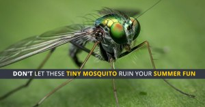 Protection from dengue