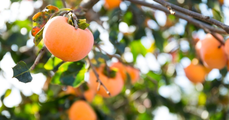 amlok fruit benefits