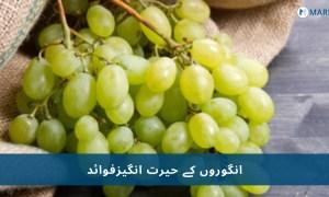 انگور نہ صرف ہمیں بیماریوں سے بچاتے ہیں بلکہ ہماری یادداشت میں بہتری لاتے ہیں