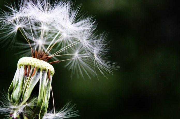 Alergia_Intolerancia_Maria_Iranzo_Biotec
