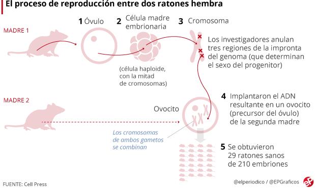Descendencia_Propia_Ratones_Mismo_Sexo_Biotecnologia_Maria_Iranzo_Biotec