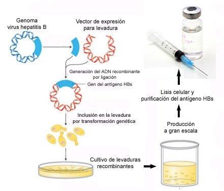 BioProductos_Vacuna_Hepatitis_B_Biotecnologia_Maria_Iranzo_Biotec
