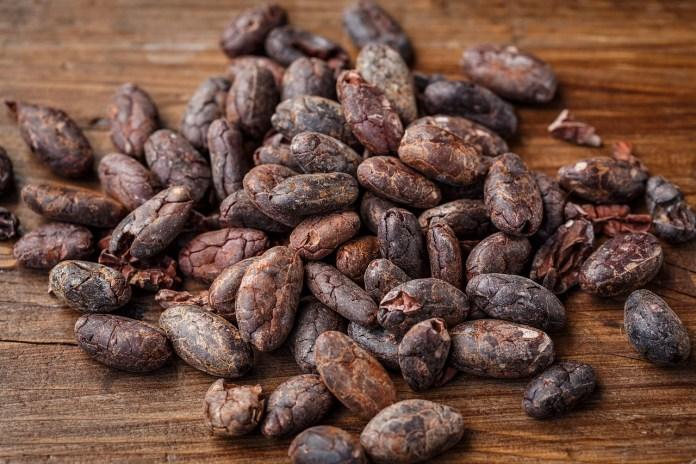 Cacao_BioProductos_Maria_Iranzo_Biotecnologia