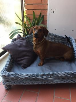 Rudy e la sua cuccia outdoor in vimini rigorosamente in tinta con il grigio e il marrone dell'arredo esterno