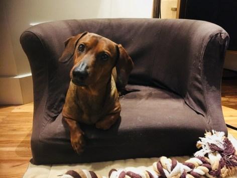 Rudy e il suo divanetto