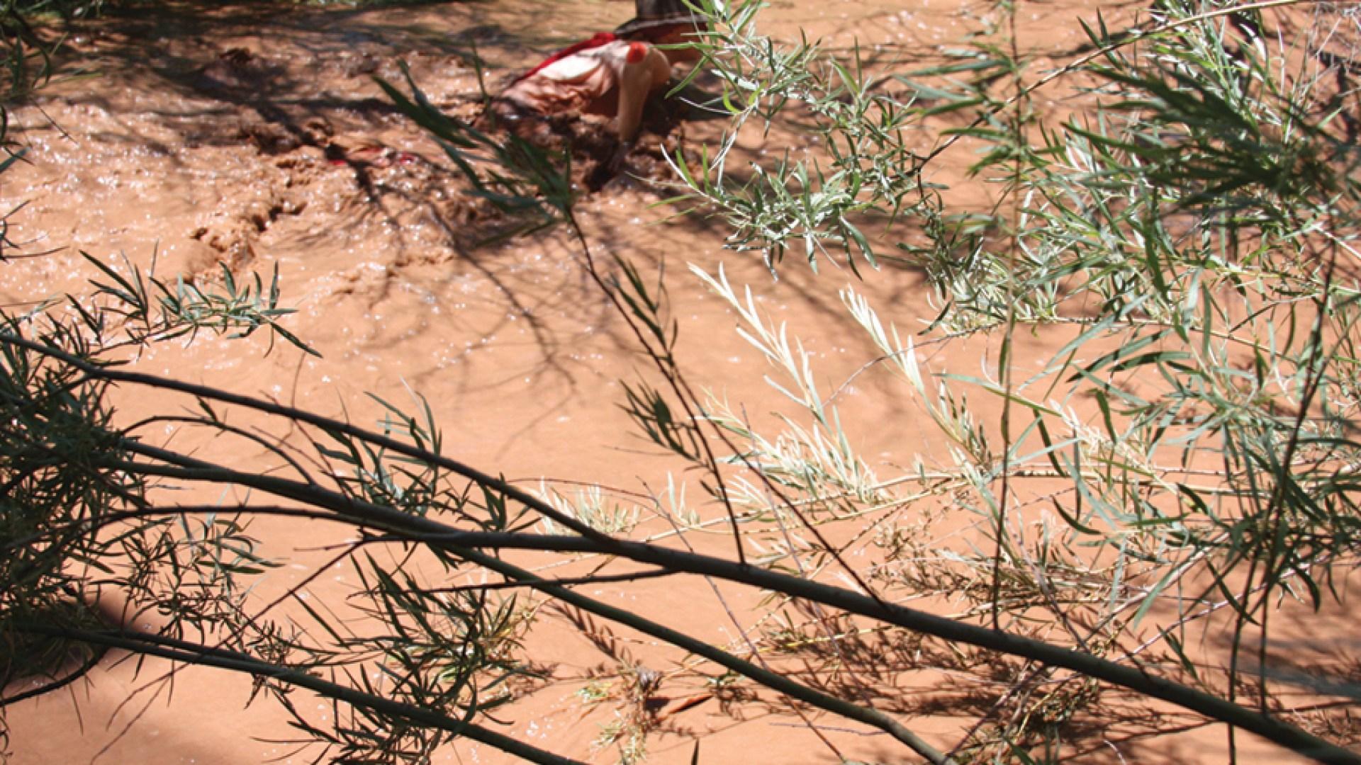 Landscape Studies: New Mexico 20