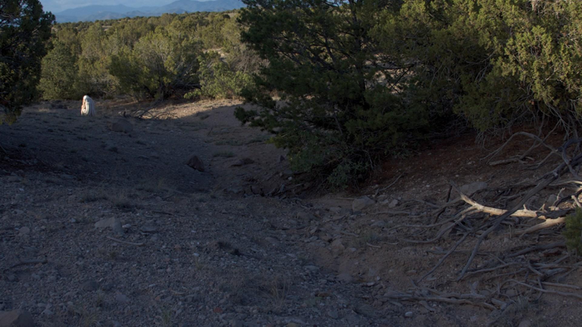 Landscape Studies: New Mexico 16