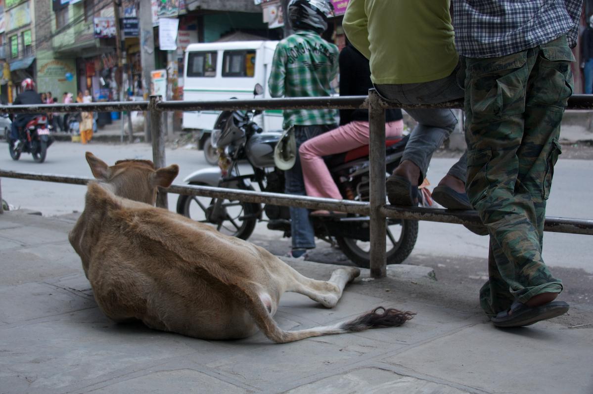 Speculations, Photo 8, Kathmandu, 2008