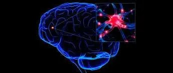 images.jpg Brain pic - The function of brain reward system