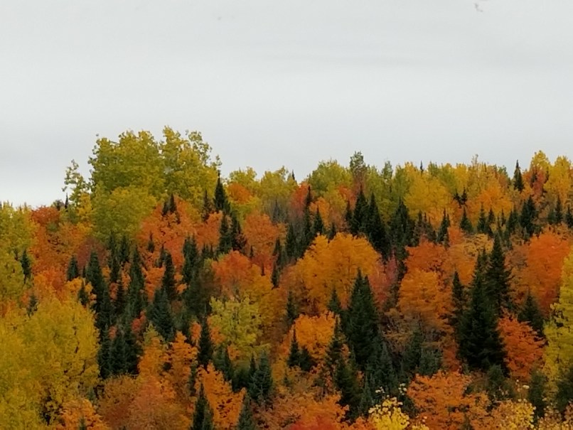 Fall colours in Maine