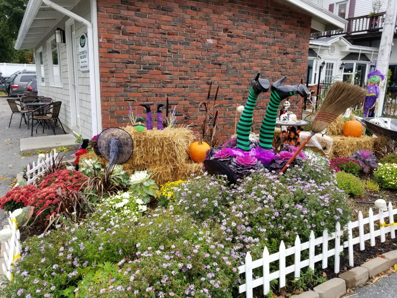 Halloween decorations in a garden. Witche's legs and broom are upside down in a pot of flowers that look like the bottom of a ruffled skirt.
