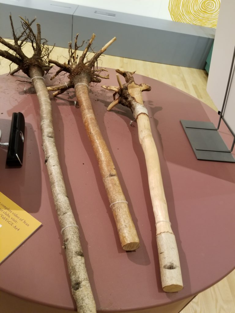 Root Clubs at Abbe Museum