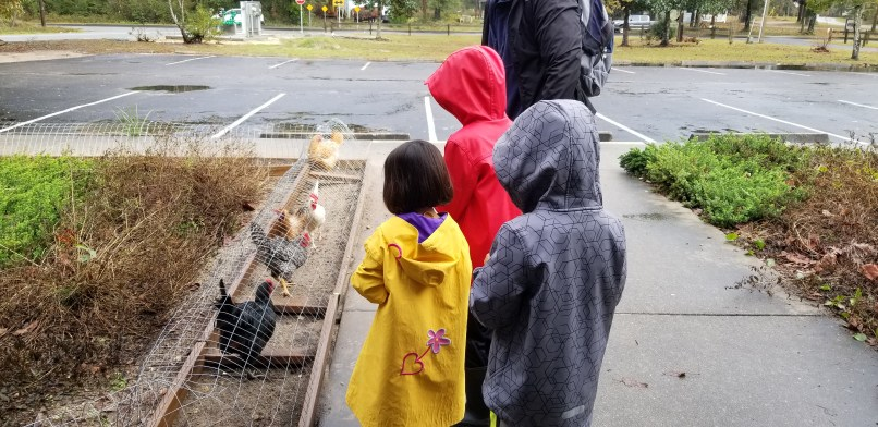 Three children look at chickens in a chicken run at the Wakulla County Public Library