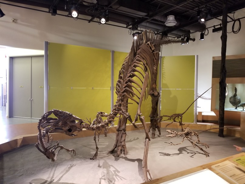 Dinosaur Provincial Park display shows small carnivorousdinosaurs attacking a large herbivourous dinosaur.