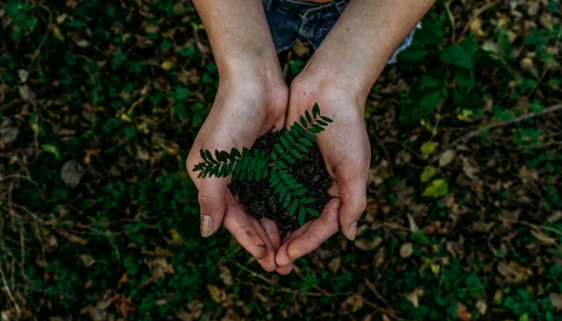 two hands showing a plant. Photo by Noah Buscher on Unsplash