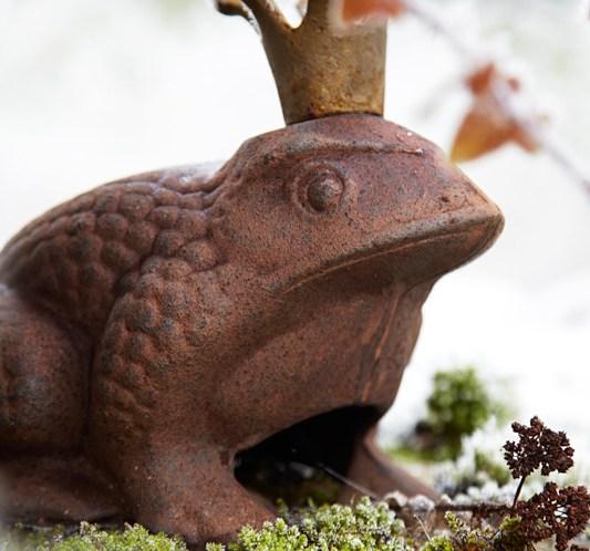 DAGENS-UTFORDRING-Spis-en-frosk
