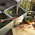 Grønn te + sitron = sant