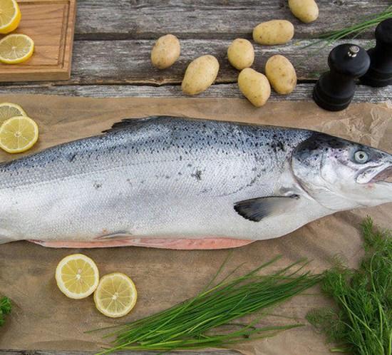GUIDE-Urter-til-fisk
