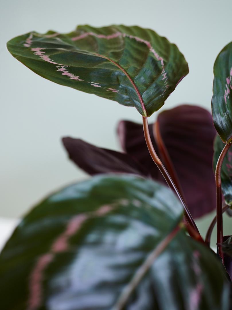 interiørtips,-DIY,-blogg,-planter,-blogg,-blomster,-bohem