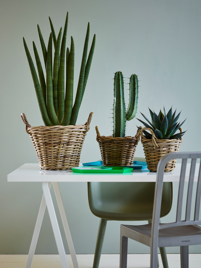 interiørtips,-DIY,-blogg,-planter,-blogg,-kaktus-og-sukkulenter