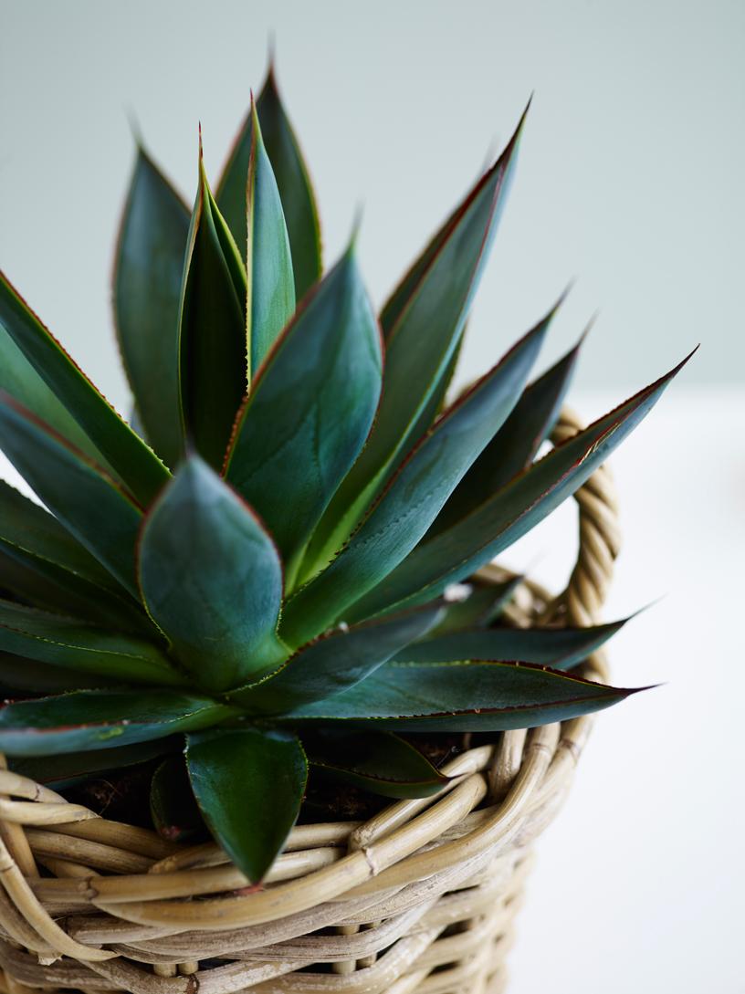 interiørtips,-DIY,-blogg,-planter,-blogg