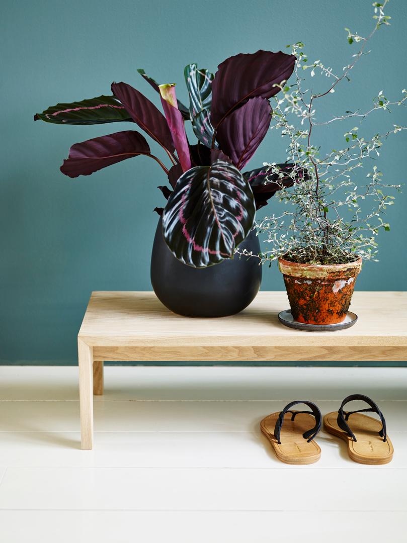 interiørtips,-ideer,-DIY,-blogg,-planter,-tips,-blomster