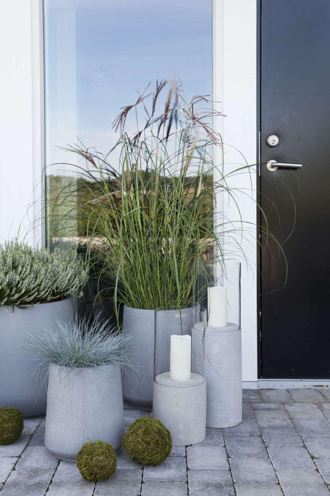 minimalistiske_planter_utenfor_doren