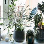 De 15 mest trendy grønne plantene i 2019