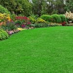Beautiful-lawn