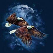 Vogel Spirits van de 4 windrichtingen