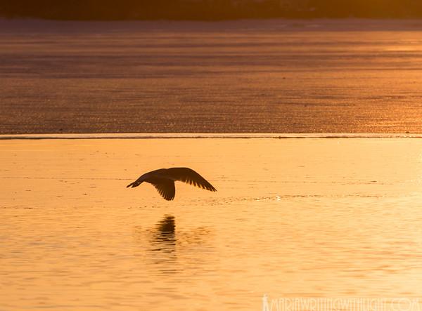 island weddings, flying bird